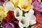 Gros plan d'un Bouquet de Freesias colorés