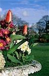 Urne remplie de fleurs de printemps - tulipes et primevères