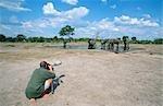Man Photographing an Elephant (Loxodonta africana) Herd at a Waterhole