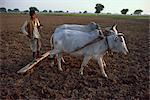 Agriculteur labourant, Inde, Asie