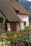 Rose lavé chaumière à Dunster dans le Somerset, Angleterre, Royaume-Uni, Europe
