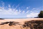 Beach, Kauai, Hawaii, USA