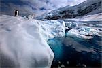 Gentoo Penguins on Iceberg, Antarctica