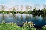 River Thames, Medmenham, Buckinghamshire, England, United Kingdom, Europe