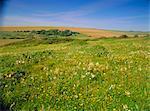 Fleurs sauvages dans les South Downs, East Dean, près de Eastbourne, East Sussex, Angleterre, Royaume-Uni, Europe