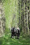 Calèche transportant des touristes provenant de la ferme pour enfants dans une avenue de peupliers dans les jardins de Umberslade Hall, Tamworth en Arden, Warwickshire, Angleterre, Royaume-Uni, Europe
