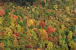 Vue aérienne sur la canopée de la forêt automnale, près de bouton vert, Blue Ridge Parkway, North Carolina, États-Unis d'Amérique, l'Amérique du Nord