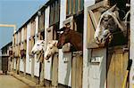 Chevaux dans les écuries, Angleterre, Royaume-Uni, Europe