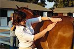Toilettage des chevaux, Angleterre, Royaume-Uni, Europe