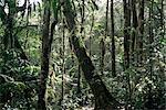 Lowland dipterocarp forest, Kota Kinabalu National Park, Sabah, Malaysia, island of Borneo, Asia