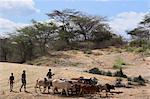 Hamer men with cattle,Turmi, Lower Omo valley, Ethiopia, Africa