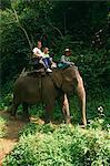 Touristes monter sur un éléphant au Centre de formation de Elephant Chiang Dao à Chiang Mai, Thaïlande, Asie du sud-est, Asie