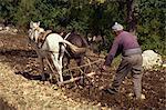 Homme labourant, Cukurcu village, vallée de Koprulu, Anatolie, Turquie, Asie mineure, Eurasie