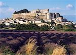 Domaine de château et leavender de Grignan, Grignan, Drome, Rhone Alpes, France, Europe