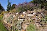 Murs en pierres sèches mur, Grassington, Yorkshire Dales National Park, North Yorkshire, Angleterre, Royaume-Uni, Europe