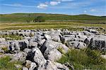 Kalkstein Pflaster bei Lea grün, Grassington, Yorkshire Dales National Park, North Yorkshire, England, Vereinigtes Königreich, Europa