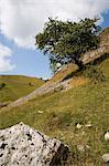 Cressbrook Dale, White Peak, Peak District National Park, Derbyshire, England, Vereinigtes Königreich, Europa
