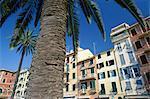 Bâtiments colorés et palmiers, Santa Margherita Ligure, péninsule de Portofino, Ligurie, Italie, Europe