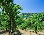 Vignobles au-dessous de la ville de San Gimignano, Toscane, Italie, Europe