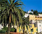 Maisons et palmiers, Menton, Alpes-Maritimes, Provence, Côte d'Azur, France, Europe