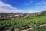 Vue du château de vignoble, Vaison-la-Romaine, Vaucluse, Provence, France, Europe