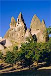 Pigeon côtes coupées dans la roche volcanique, abricotiers en avant-plan, Uchisar, Cappadoce, Turquie, Eurasie