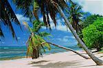 Praslin beach, Seychelles, Indian Ocean, Africa