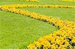 Yellow Flowers in Mirabell Garden, Salzburg, Salzburger Land, Austria