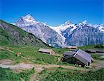Wetterhorn, 3701m et Schreckhorn, 4078m, Berner Oberland, Grisons, Suisse, Europe