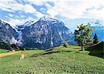 Berner Oberland in der Nähe von Grindelwald, Schweizer Alpen, Schweiz, Europa