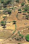 Paysage d'arbres et de cactus en zone dure de Todos Santos, au Guatemala, Amérique centrale