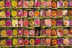 Seed packets, Bloemenmarkt (flower market), Amsterdam, Netherlands, Europe
