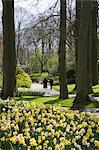 Spring daffodils at Keukenhof, park and gardens near Amsterdam, Netherlands, Europe