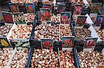 Lampen zu verkaufen in Bloemenmarkt Blume Markt, Amsterdam, Niederlande, Europa