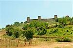 Arbres sur une colline face à un fort, Monteriggioni, Province de Sienne, Toscane, Italie