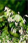 Gros plan d'une plante, La Spezia, Ligurie, Italie