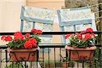 Flower pots with clothesline in the background, Via Colombo, RioMaggiore, Cinque Terre, La Spezia, Genoa, Liguria, Italy