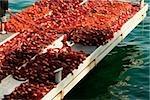 Net sur un quai de pêche, Marina Grande, Capri, Sorrento, péninsule de Sorrente, Province de Naples, Campanie, Italie