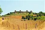 Vignoble en face d'un fort, Monteriggioni, Province de Sienne, Toscane, Italie