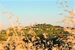 Ville sur une colline, San Gimignano, Province de Sienne, Toscane, Italie