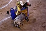 Vue grand angle sur un taureau de combat, Plaza De Toros San Marcos, Aguascalientes, Mexique