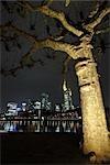Tree and Frankfurt Skyline, Hesse, Germany