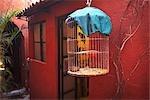 Bird in Cage in Front of House, San Miguel de Allende, Guanajuato, Mexico