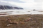 Inuit Ausgrabungsstätte, Craig Harbour, Ellesmere-Insel, Nunavut, Kanada