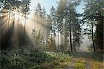 Sun Shining Through Autumn Forest, Odenwald, Bavaria, Germany