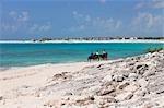 Ausritt am Strand, Cayo Largo, Kuba