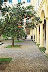 Oranger en Cour, Cordoue, Andalousie, Espagne, Europe