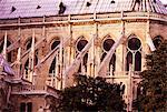 Vol de contreforts, Notre Dame, Paris, France, Europe