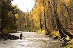 Flyfisherman on Russian River Kenai Peninsula Alaska Autumn