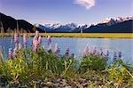 Weibliche Wanderer sitzt von Lupine Blüten in der Nähe von Teich SC Alaska Sommer Chugach SP 20 Mile River Valley